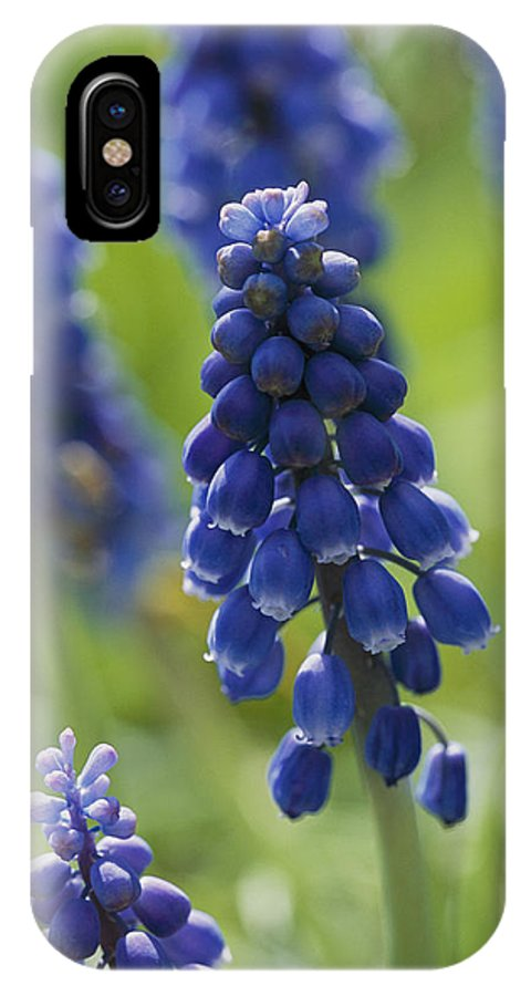 Scenes And Views IPhone X / XS Case featuring the photograph Close View Of Grape Hyacinth Flowers by Darlyne A. Murawski