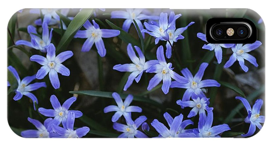 Plants IPhone X / XS Case featuring the photograph Close View Of Spring Flowers by Darlyne A. Murawski