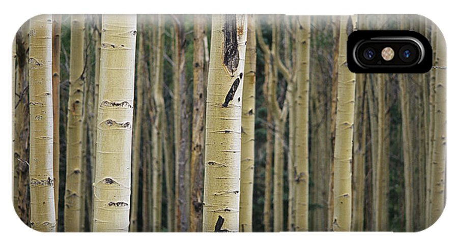 Plants IPhone X / XS Case featuring the photograph Close View Of Tree Trunks In A Stand by Raul Touzon