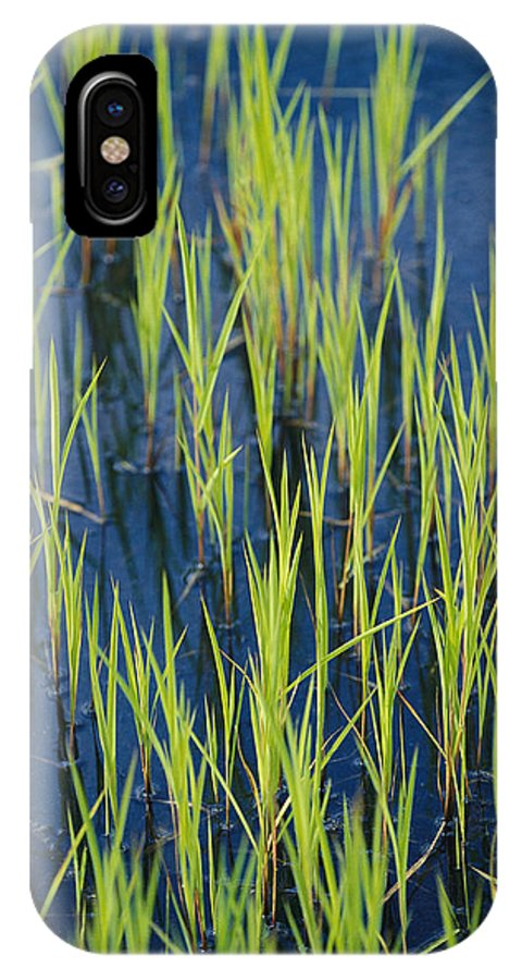 North America IPhone X / XS Case featuring the photograph Close View Of Water Grasses Growing by Skip Brown