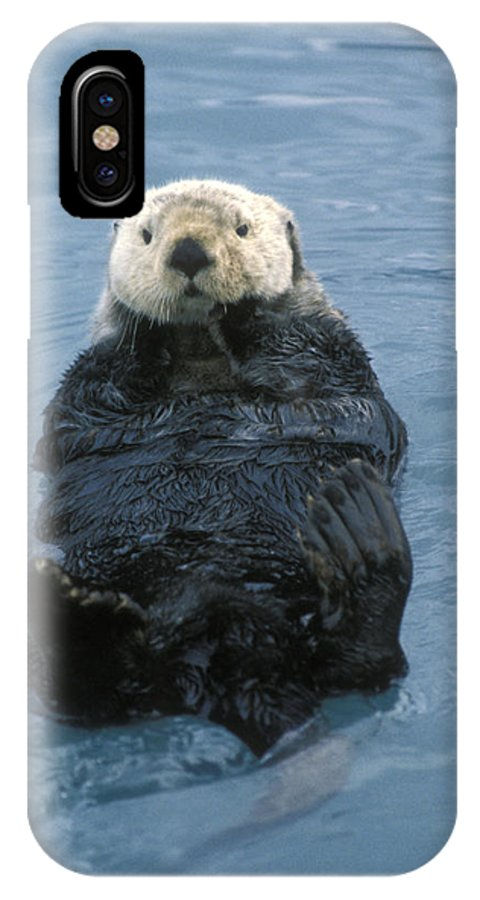 Animal Behavior IPhone X Case featuring the photograph Closeup Of A Sea Otter Enhydra Lutris by Rich Reid