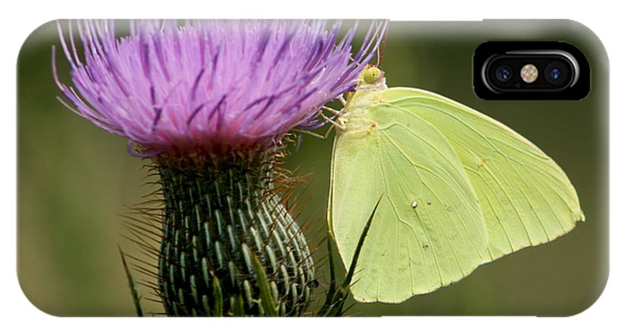 Phoebis Sennae IPhone X Case featuring the photograph Cloudless Sulfur Butterfly On Bull Thistle Wildflower by Kathy Clark