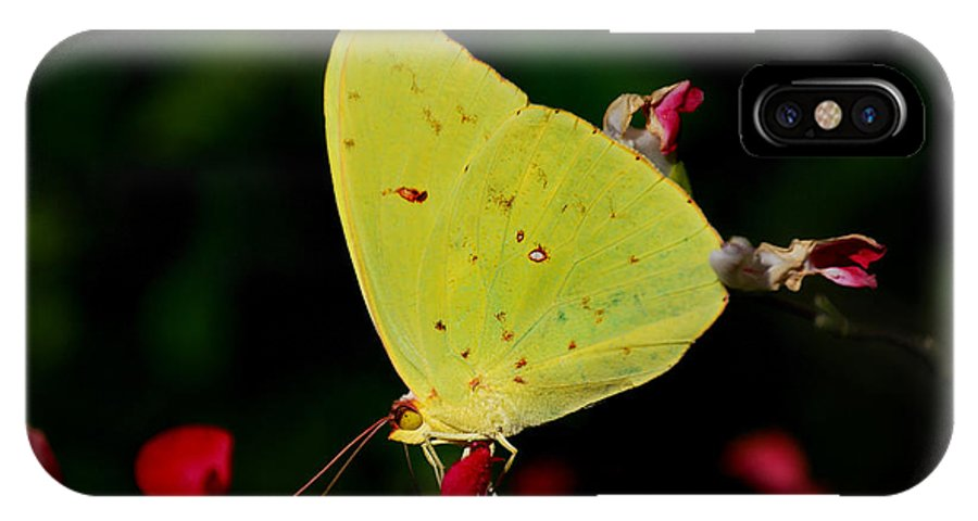 Sulphur IPhone X Case featuring the photograph Cloudless Sulphur by Skip Willits