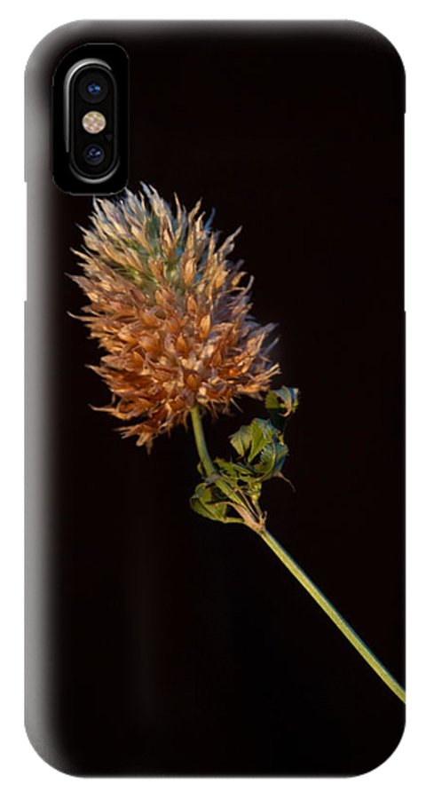 Cover IPhone X Case featuring the photograph Clover Aflow 1 by Douglas Barnett