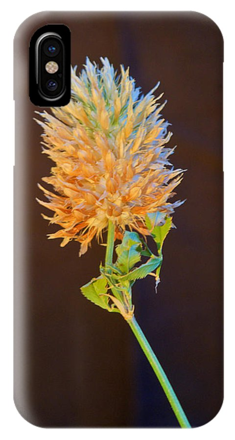 Cover IPhone X Case featuring the photograph Clover Aglow 6 by Douglas Barnett