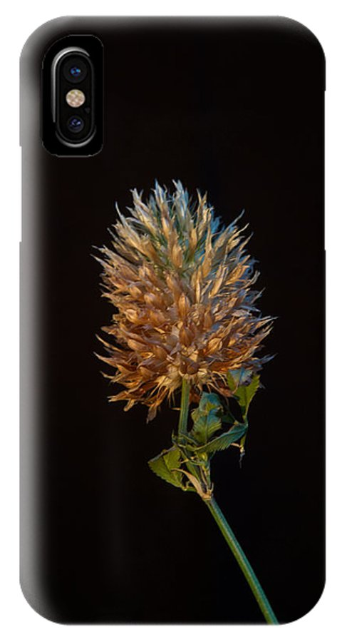 Cover IPhone X Case featuring the photograph Clover Aglow 7 by Douglas Barnett