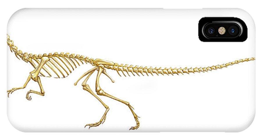 Coelophysis IPhone X / XS Case featuring the photograph Coelophysis Dinosaur Skeleton, Art by Gary Hincks