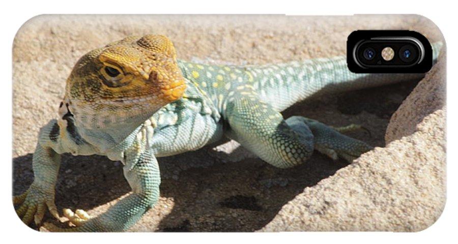 Collard Lizard IPhone X / XS Case featuring the photograph Collard Lizard by Adam Jewell
