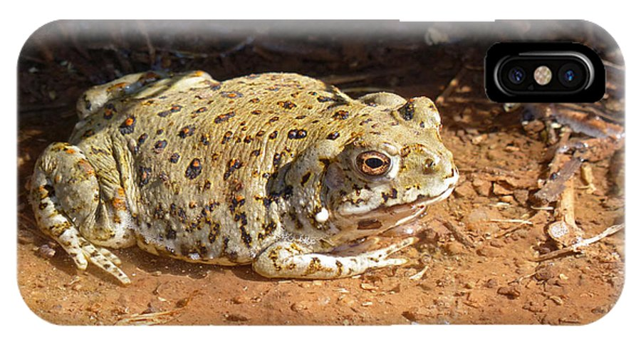 Colorado River Toad IPhone X Case featuring the photograph Colorado River Toad by Randall Ingalls