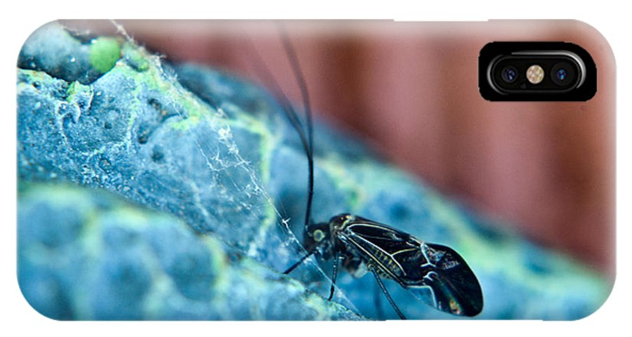 Psocoptera IPhone X Case featuring the photograph Colorful Psocid 1 by Douglas Barnett