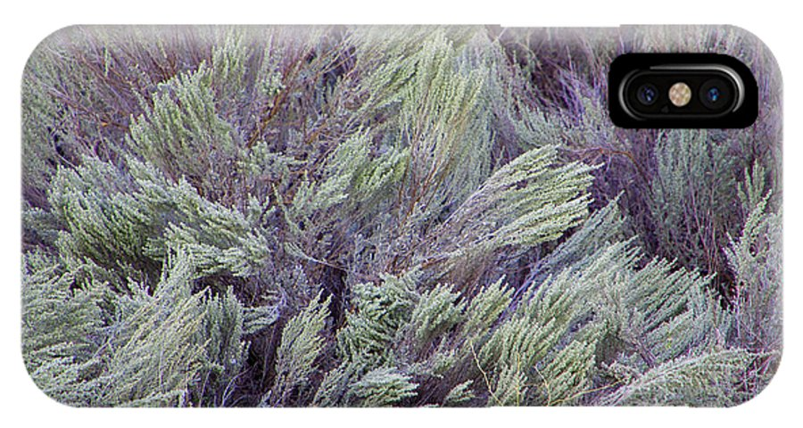 Sagebrush IPhone X Case featuring the photograph Colorful Sagebrush by Larry Keahey