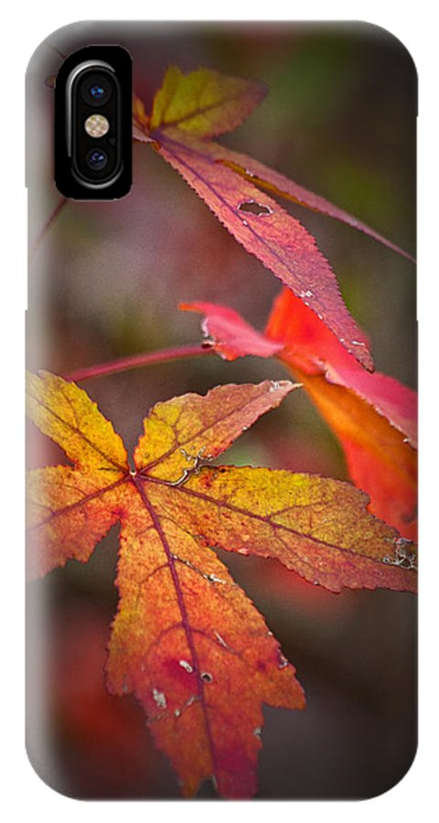 Autumn IPhone X Case featuring the photograph Colors by Karol Livote