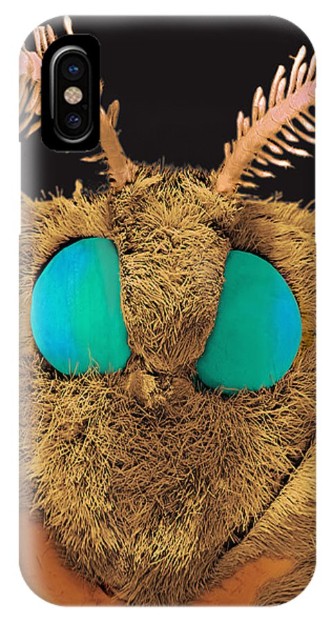 Silk Moth IPhone X Case featuring the photograph Coloured Sem Of The Head Of A Silk Moth, Bombyx Sp by Volker Steger