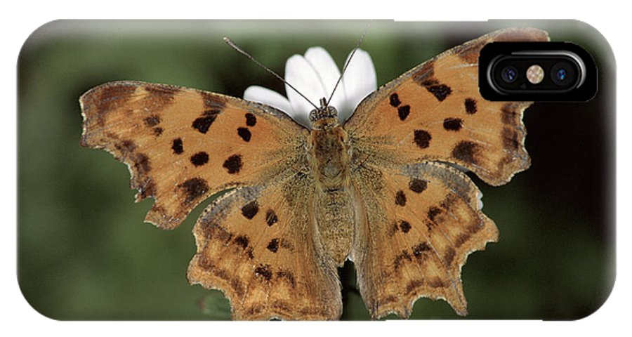 Npl IPhone X Case featuring the photograph Comma Polygonia C-album, Germany by Hans Christoph Kappel