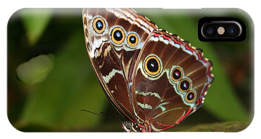 Morpho Peleides IPhone X Case featuring the photograph Common Blue Morpho by Laurel Talabere
