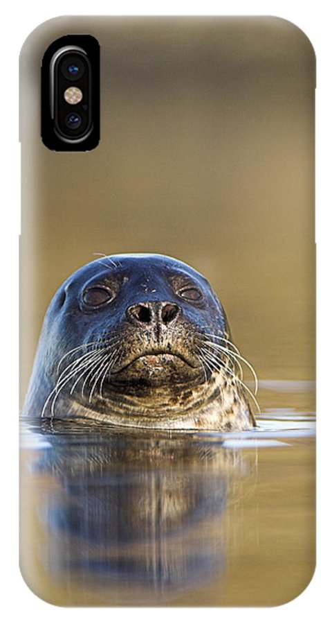 Phoca Vitulina IPhone X Case featuring the photograph Common Seal by Duncan Shaw