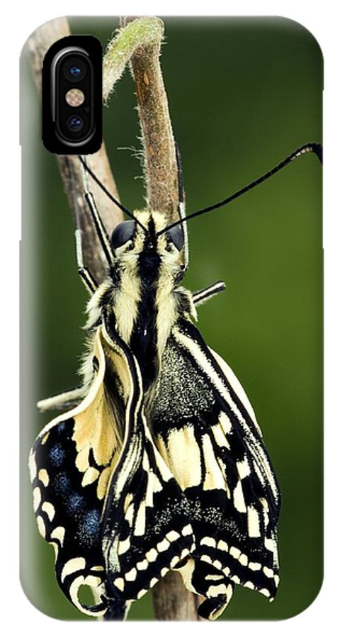 Common Swallowtail IPhone X Case featuring the photograph Common Swallowtail Butterfly by Paul Harcourt Davies