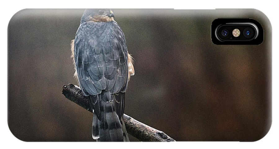 Hawk IPhone X Case featuring the photograph Coopers Hawk by Susan Capuano