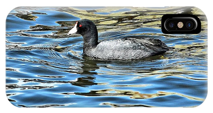 Coot IPhone X Case featuring the photograph Coot In The Lake by Don Mann