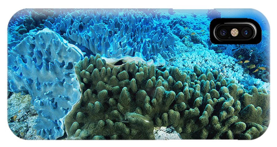 Animal IPhone X / XS Case featuring the photograph Coral Colonies by Alexis Rosenfeld