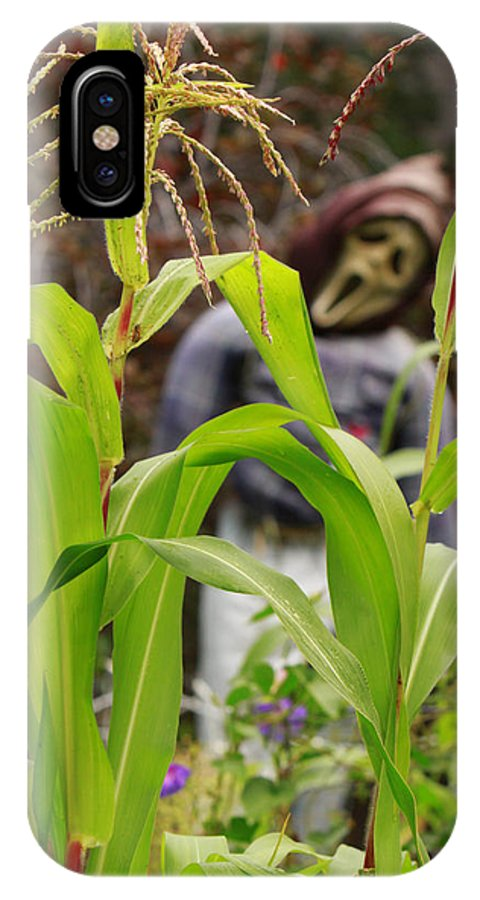 Garden IPhone X Case featuring the photograph Cornstalks by James BO Insogna