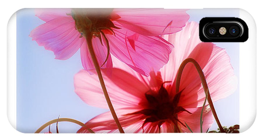 Cosmos IPhone X Case featuring the photograph Cosmos Flowers by Mal Bray