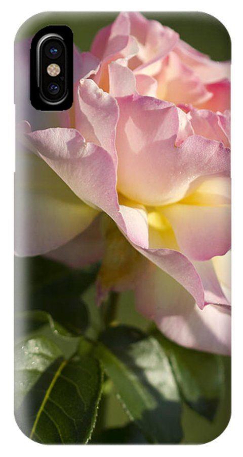 Peace Rose IPhone X Case featuring the photograph Cotton Candy Pink Peace Rose by Kathy Clark