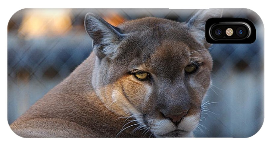 Roy Williams IPhone X Case featuring the photograph Cougar Portrait - Sad Eyes by Roy Williams