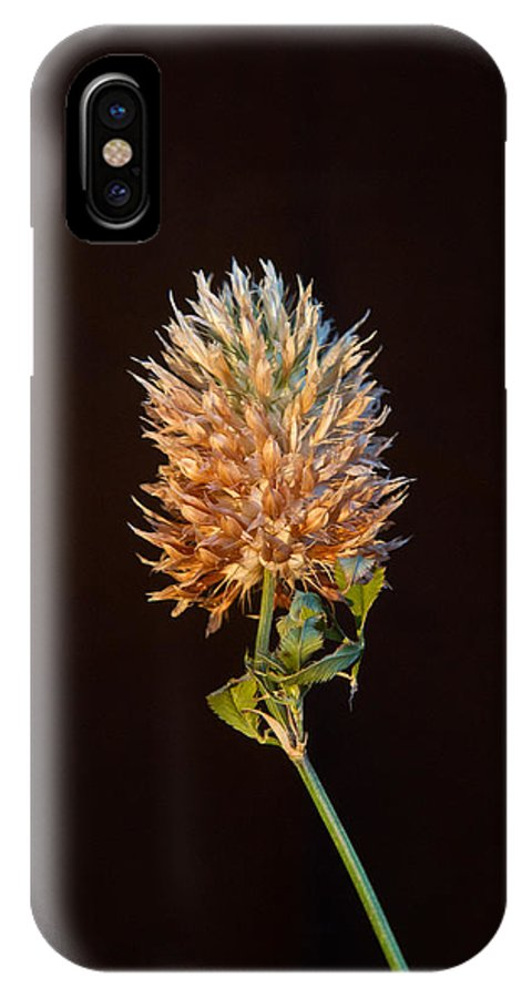 Cover IPhone X Case featuring the photograph Cover Aglow 1 by Douglas Barnett