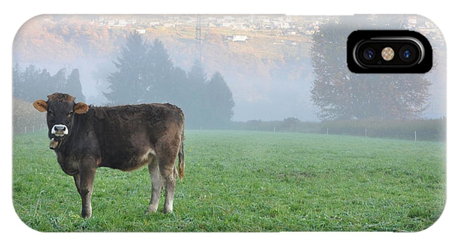 Cow IPhone X Case featuring the photograph Cow On The Foggy Field by Mats Silvan