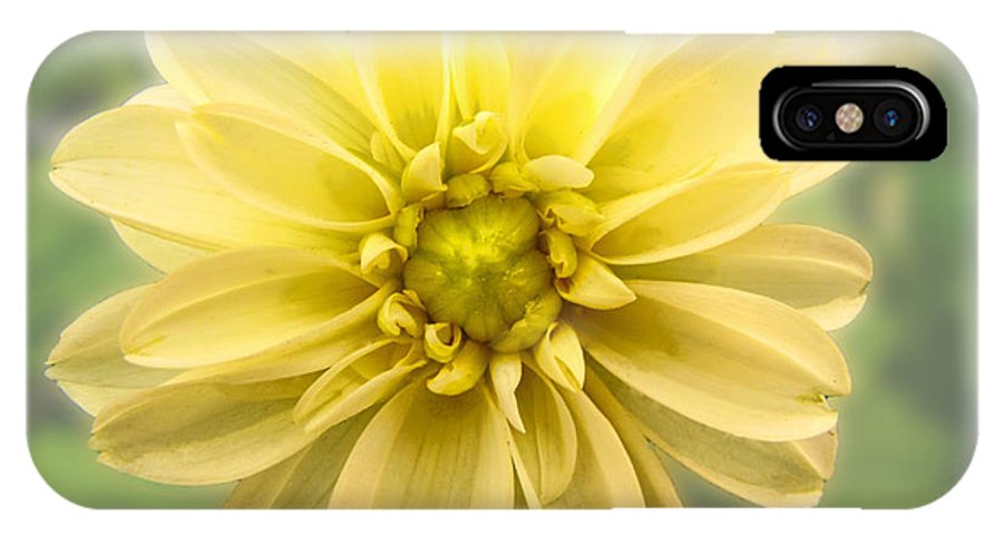 Nature IPhone X Case featuring the photograph Cream Dalia by Debbie Portwood