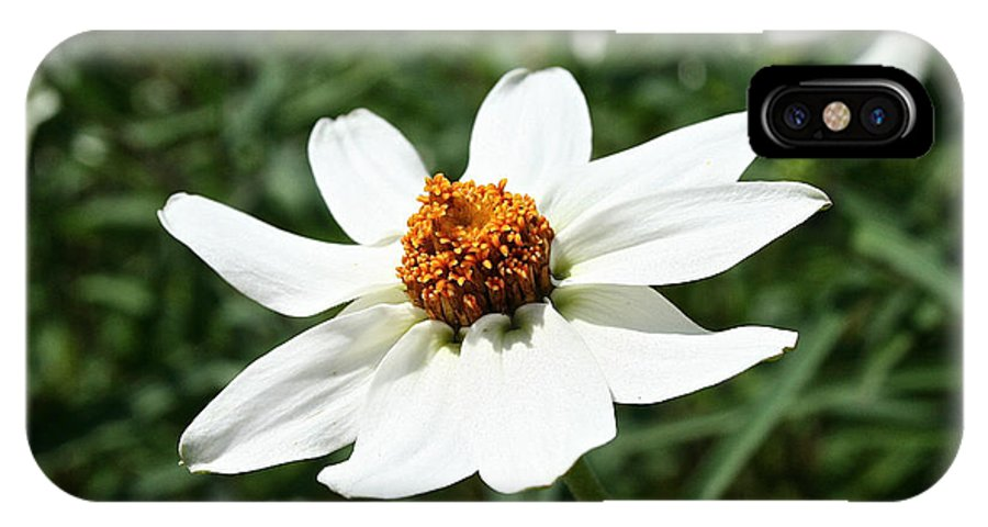 Outdoors IPhone X Case featuring the photograph Creeping Zinnia by Susan Herber