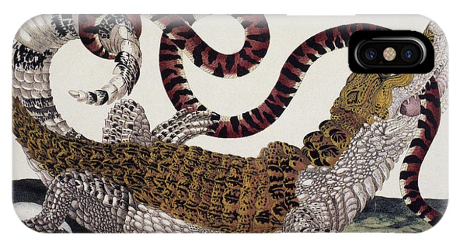 1705 IPhone X Case featuring the photograph Crocodile & Snake by Granger