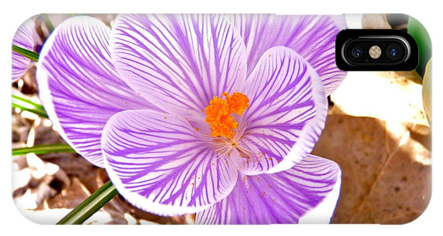 Crocus IPhone X Case featuring the photograph Crocus by Catherine Conroy