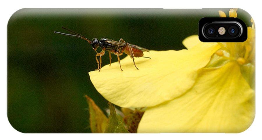 Hyönteinen IPhone X Case featuring the photograph Cynipoidea by Jouko Lehto