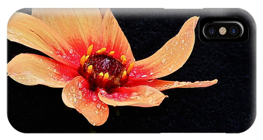 Photography IPhone X / XS Case featuring the photograph Dahlia Study by Sean Griffin