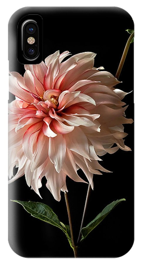 Flower IPhone X Case featuring the photograph Dahlia With Bud by Endre Balogh