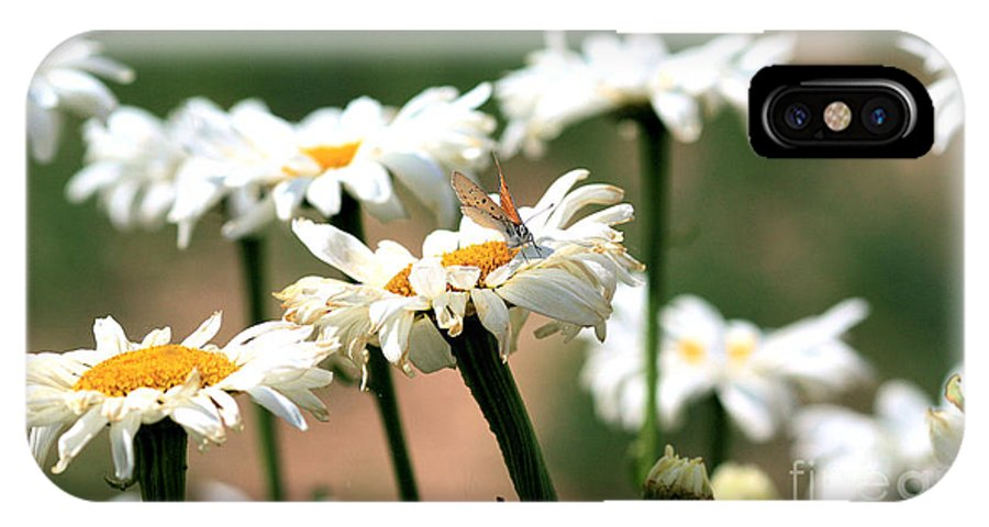Daisies IPhone X Case featuring the photograph Daisies by Brenda Deem
