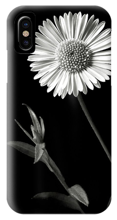 Flower IPhone X Case featuring the photograph Daisy In Black And White by Endre Balogh