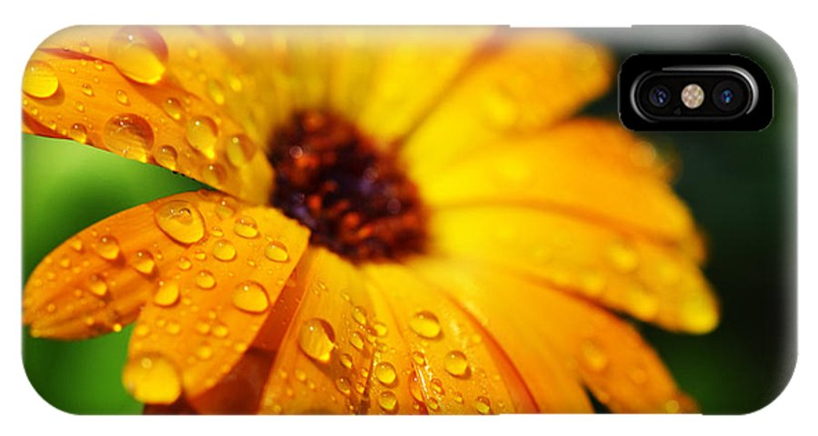 Orange IPhone X Case featuring the photograph Daisy In The Rain by Thomas R Fletcher