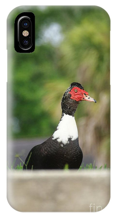 Avian.nature IPhone X Case featuring the photograph Damn Another Human by Jack Norton