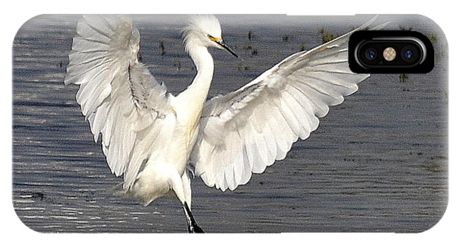 Snowy Egret IPhone X / XS Case featuring the photograph Dancer On The Water by Fraida Gutovich