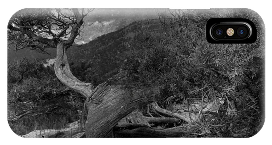 Trees IPhone X Case featuring the photograph Dancing Wind by The Artist Project