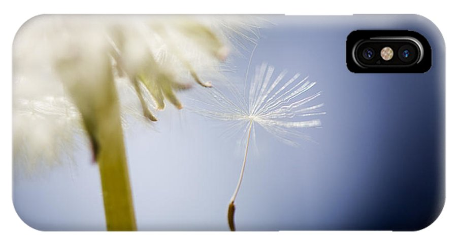 Abstract IPhone X Case featuring the photograph Dandelion by Kati Finell