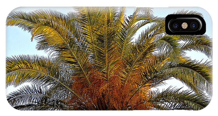 Date Palm Tree IPhone X / XS Case featuring the painting Date Palm by David Lee Thompson