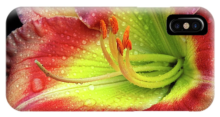 Daylily IPhone X Case featuring the photograph Daylily by Dave Mills