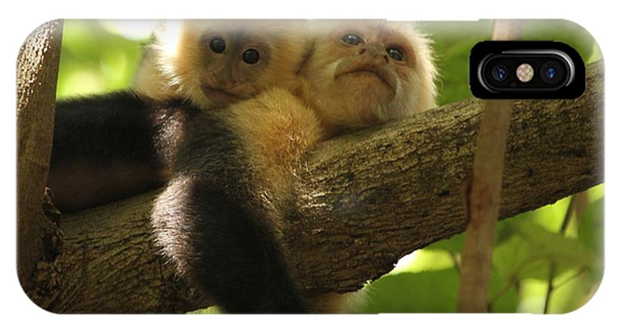 White Faced Monkeys IPhone X / XS Case featuring the photograph Daytime Siesta by Adam Jewell