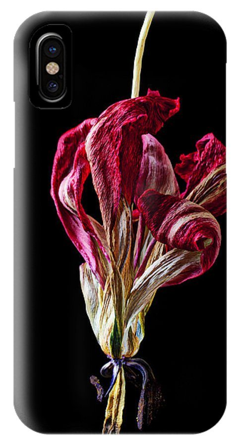 Dead IPhone X Case featuring the photograph Dead Dried Tulip by Garry Gay