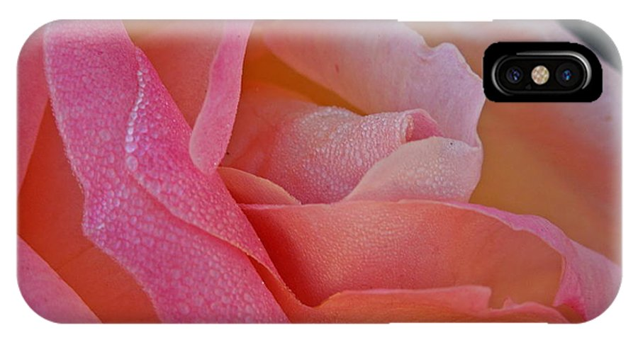 Flowers IPhone X Case featuring the photograph December Rose by Diana Hatcher