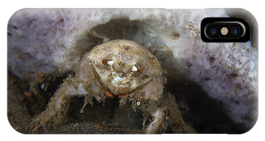 Crab IPhone X Case featuring the photograph Decorator Crab With Mauve Sponge by Mathieu Meur